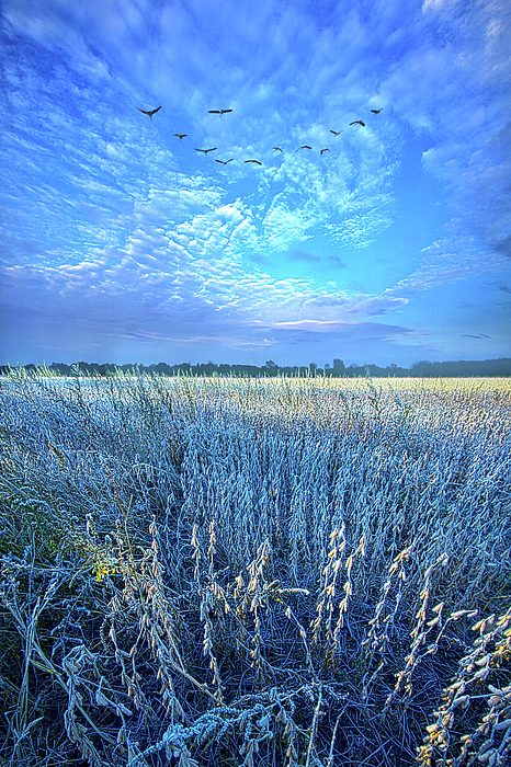 Adversity Tempers the Human Heart to Discover its Real Worth by Phil Koch