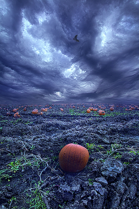 Ask Not When The Thunder Comes by Phil Koch